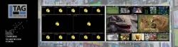TAG Decryptor - дескремблер для мониторинга OTT и DVB MPEG-TS